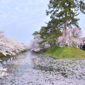 弘前の春、名物の桜を見守りつづける弘前公園の「桜守」たち